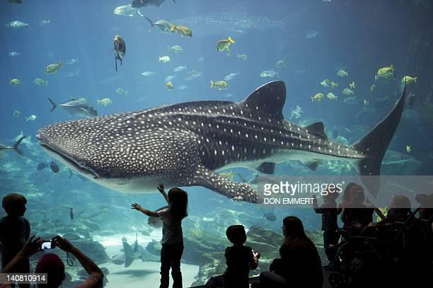 Georgia Aquarium Stock Pictures