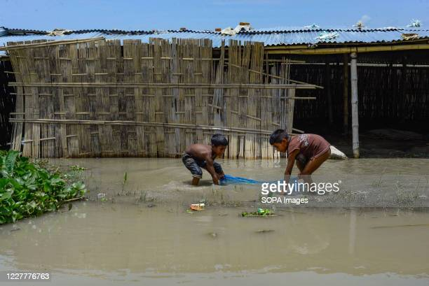 Children are catching fish in flooded area. The flood situation is worsening in Munshiganj. Due to the heavy rain, the water level of the Padma River...