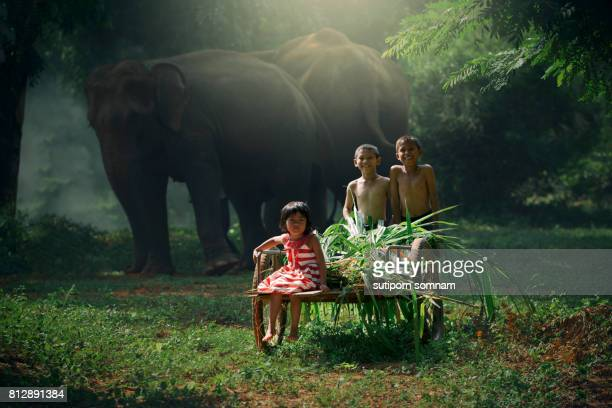 children are helping to harvest grass in a wheelchair to feed the elephants. - very young thai girls fotografías e imágenes de stock