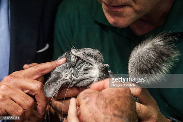 Children are invited to touch a chinchillas during the opening of the event 'Getting in touch with nature' in the new educational area at the...