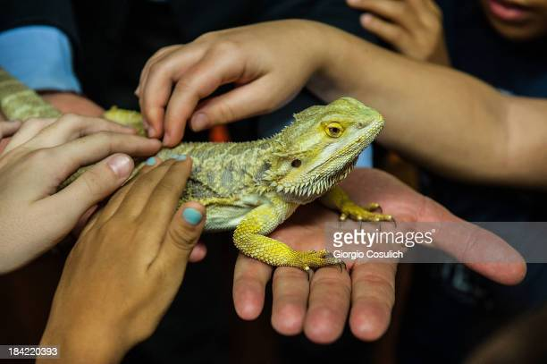 Children are invited to touch the Australian reptile 'Bearded Dragon' during the opening of the event 'Getting in touch with nature' in the new...