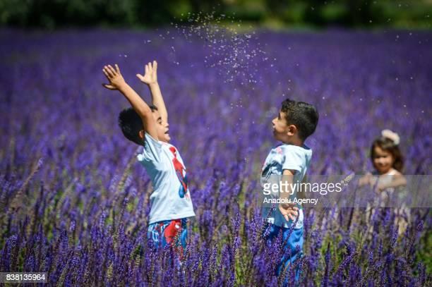 Children are seen in purplish wild flower garden in Edremit district of Van Turkey on August 23 2017