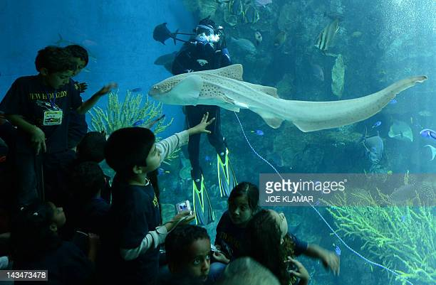 Children are watching a zebra shark and a diver at the Aquarium of the Pacific in Long Beach California on April 26 2012The Aquarium features a...