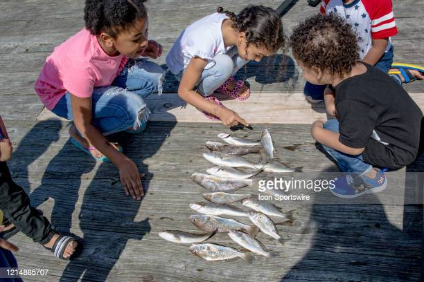 Children ask to touch Gary Murrell of Norfolk's catch on the Virginia Beach Fishing Pier on Memorial Day weekend on May 22 in Virginia Beach VA This...