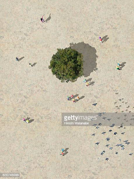 Children at plaza with tree aerial view
