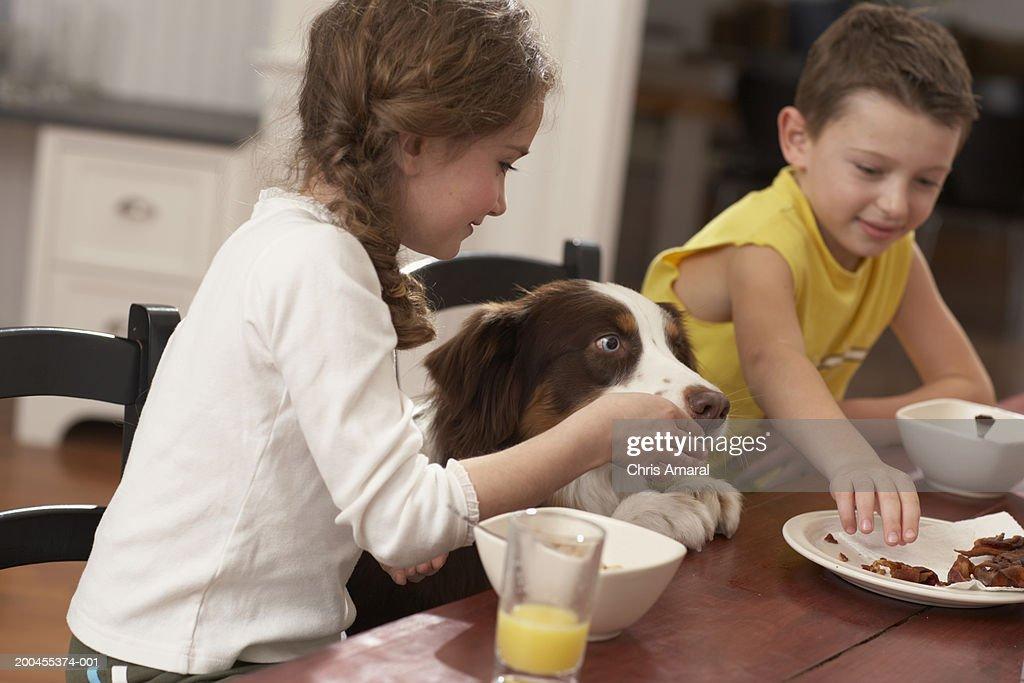 Children (6-8) at table feeding dog : Stock Photo