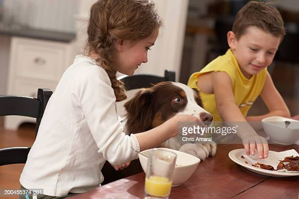 children (6-8) at table feeding dog - dog eats out girl stock pictures, royalty-free photos & images