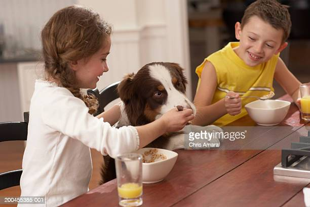 children (6-8) at table feeding dog, smiling - dog eats out girl stock pictures, royalty-free photos & images