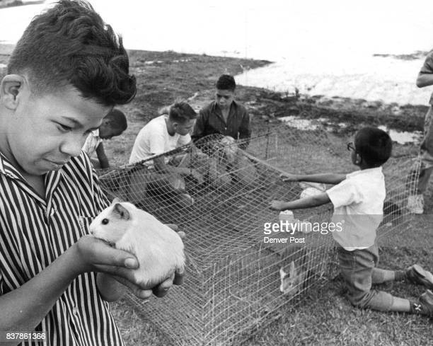 Children at the Home have taken a number of pets under their core Ray holds guinea pig named Flintstone Jr Boys have planted gorden for pet food...