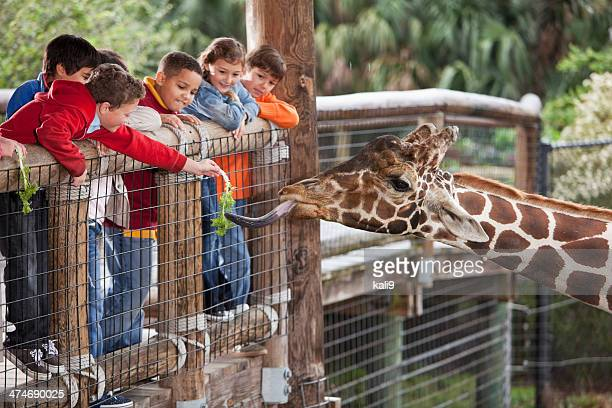 Children at zoo feeding giraffe