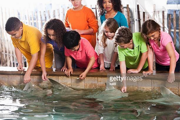 Pastinaca exhibición en el zoológico de los niños