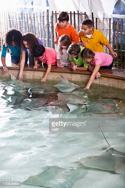 children at zoo stingray exhibit - stingray stock photos and pictures