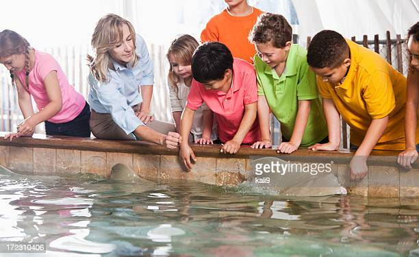 children at zoo stingray exhibit - zoo keeper stock pictures, royalty-free photos & images