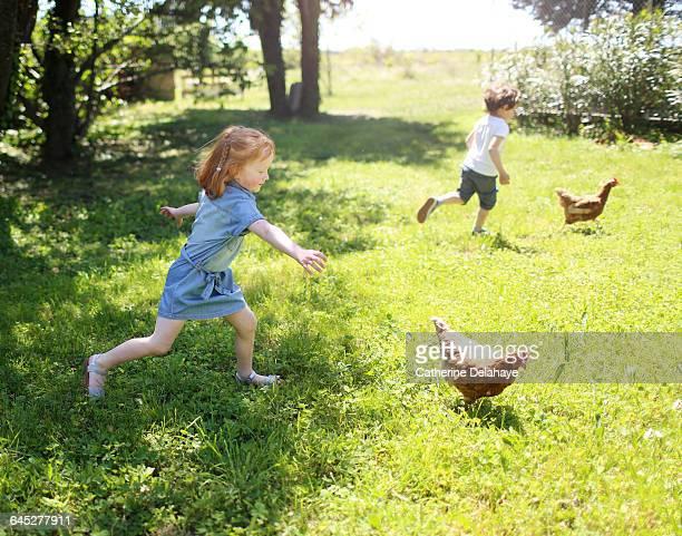 2 children chasing chickens - förföljande bildbanksfoton och bilder