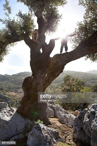 Children climbing an olive tree