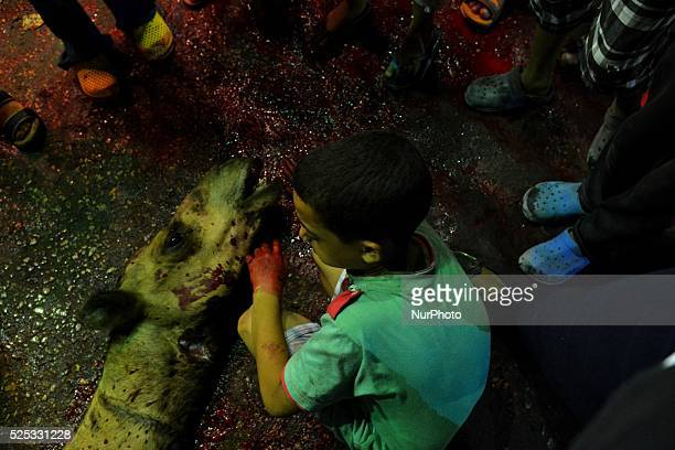Children during Eid alAdha sacrifice feast day in Cairo Egypt on September 25 2015 To celebrate Muslims slaughter sheep goats cows and camels to...