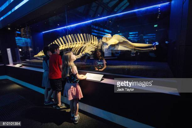 Children examine a sixmeterlong female bottlenose whale skeleton known as the Thames Whale after it strayed from its home in the North Atlantic to...