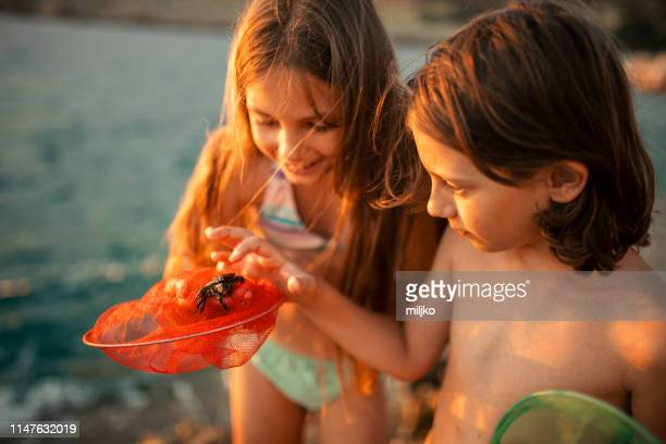 children exploring rocks on the beach - crab stock pictures, royalty-free photos & images