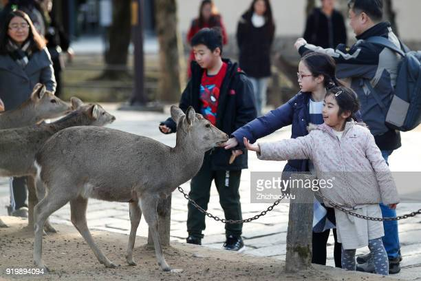 Children feed deer at Nara Park of Nara prefecture on February 18 2018 in Osaka Japan Many Chinese tourists choose to travel overseas during the...