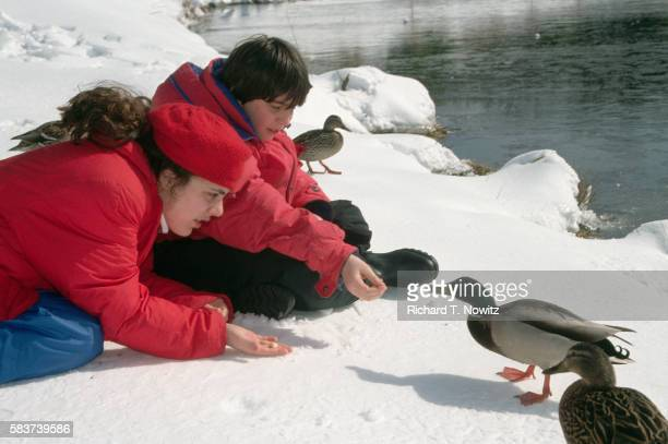 children feeding ducks - rockville maryland stock pictures, royalty-free photos & images