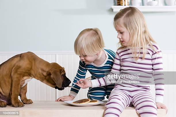 children feeding pancakes to their dog - dog eats out girl stock photos and pictures