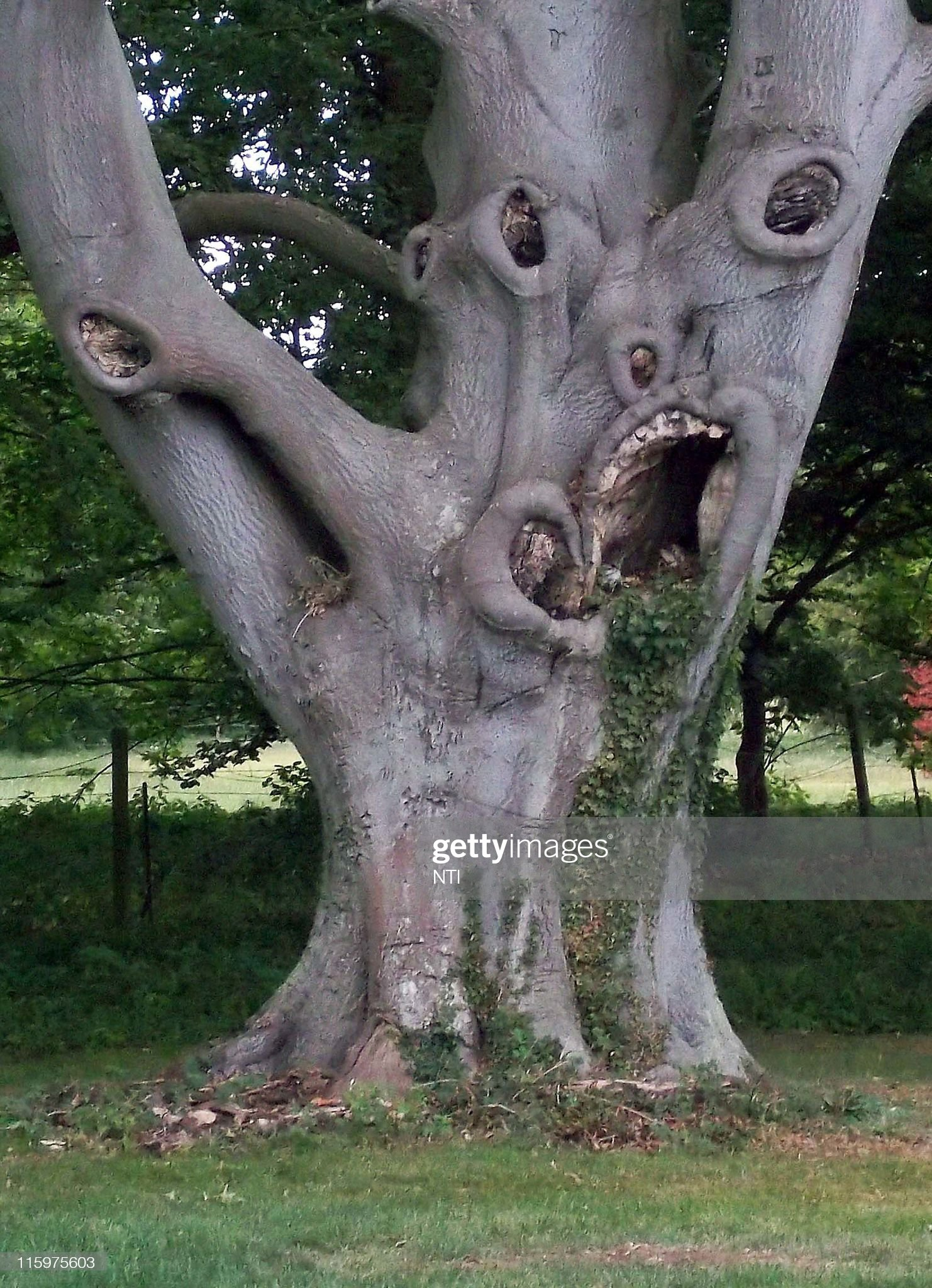 Britain's Scariest Tree? : News Photo