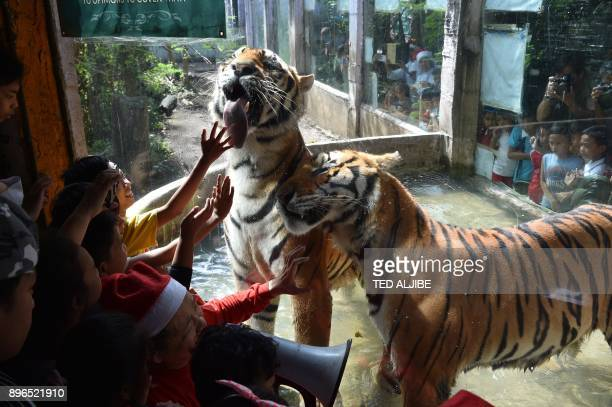 Children from an orphanage watch Bengal tigers through a glass casing during a Christmas party for children visiting from an orphanage at a zoo in...