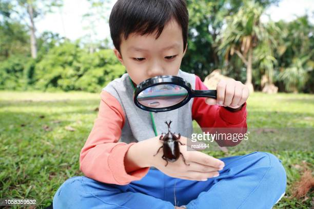 children have a beetle - horned beetle stock pictures, royalty-free photos & images