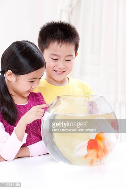 Children having fun with goldfishes