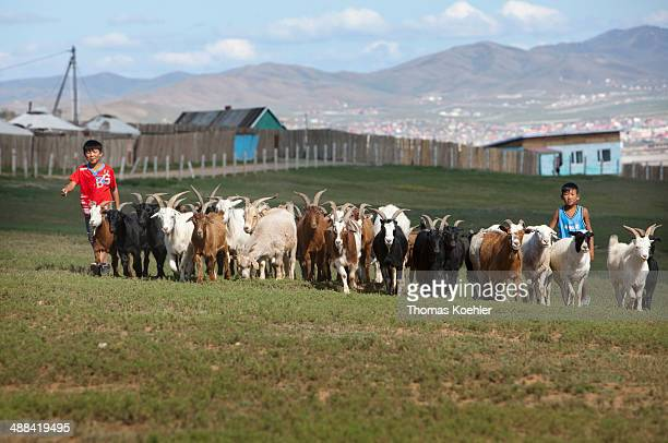 Children herding goats on August 21 2010 in Ulan Bator Mongolia