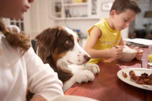 Children (6-8) in kitchen at table with dog - gettyimageskorea