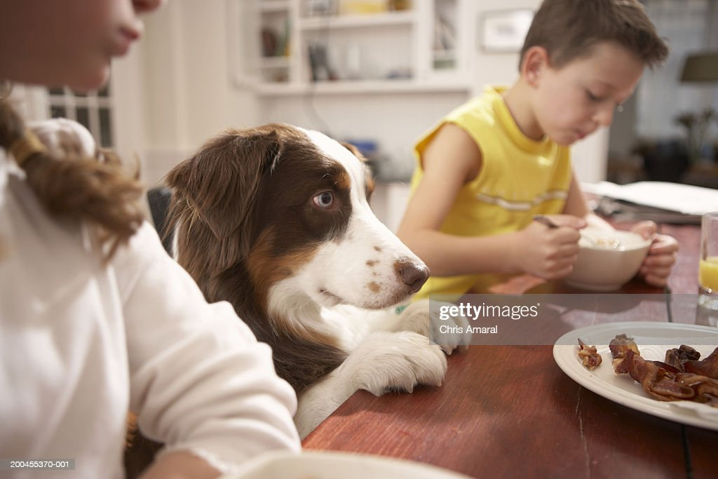 Children (6-8) in kitchen at table with dog