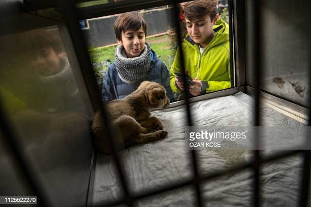 Children look at a puppy presentend in a showcase on a Vetbus for adaption on January 31 2019 at Rumelihisari district in northern Istanbul In...