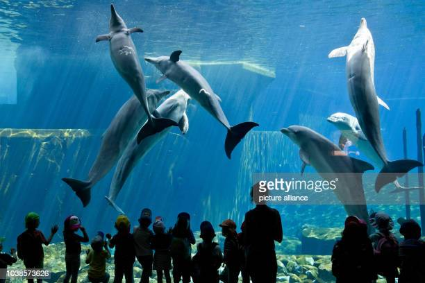 Children look at dolphins at the Doplhinarium at the zoo in Nuremberg Germany 22 May 2014 Photo Daniel Karmann/dpa | usage worldwide