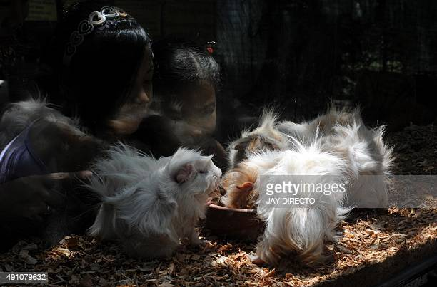 Children look at guinea pigs on the eve of World Animal Day at Malabon Zoo in suburban Manila on October 3 2015 The day began in Florence Italy in...