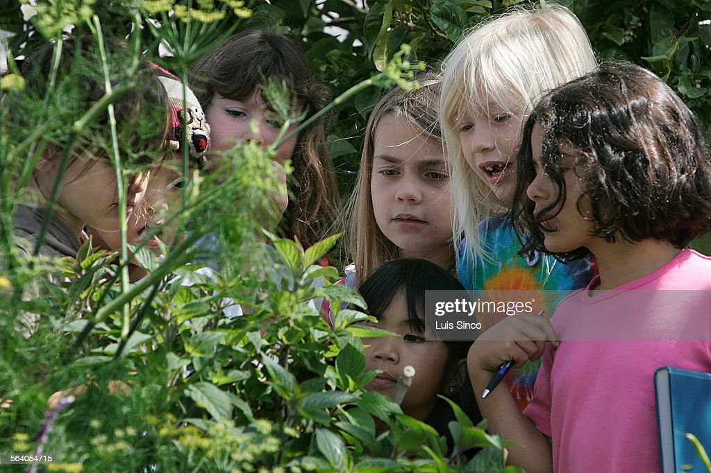 Children look at plants and insects in the garden of nPacifica Community Charter School in West L.A : News Photo