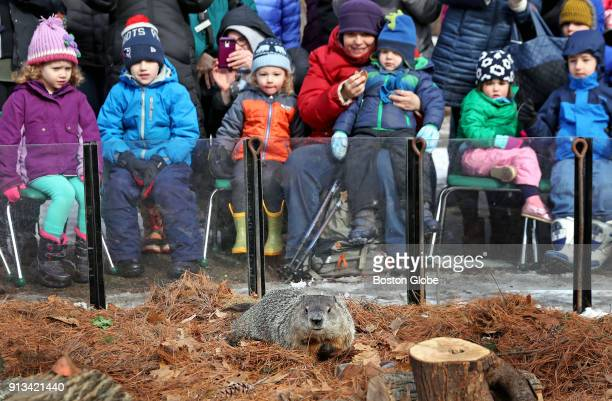 Children look on as Ms G the Official Groundhog of the Commonwealth prepares to make her annual prediction on the length of the remaining winter...