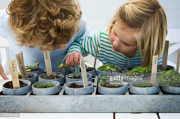 Children looking at mixed potted seedlings (Part of series)