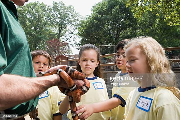 children looking at snake - milk snake stock pictures, royalty-free photos & images