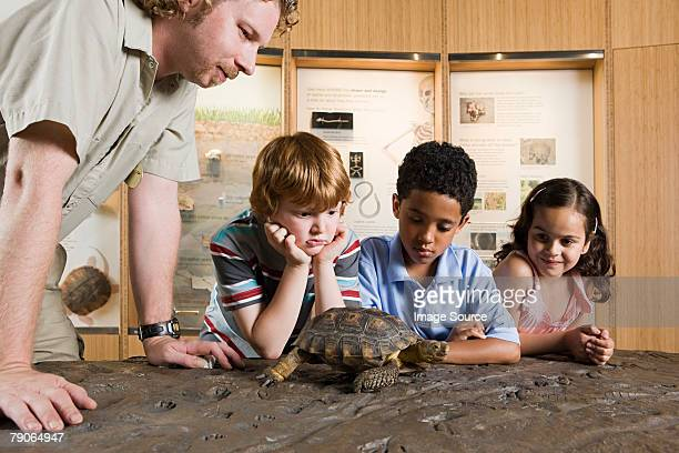 children looking at tortoise - zoo keeper stock pictures, royalty-free photos & images