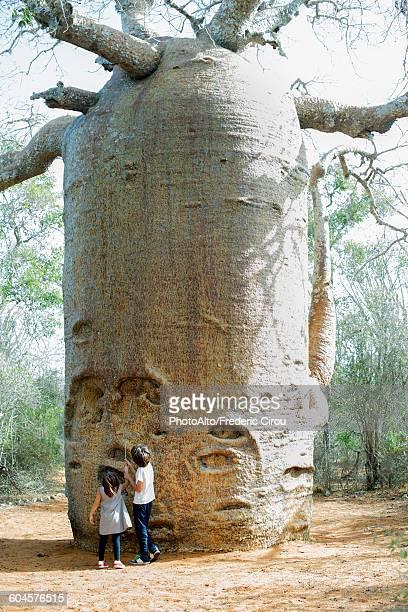 children looking up at baobab tree - madagascar enfant photos et images de collection