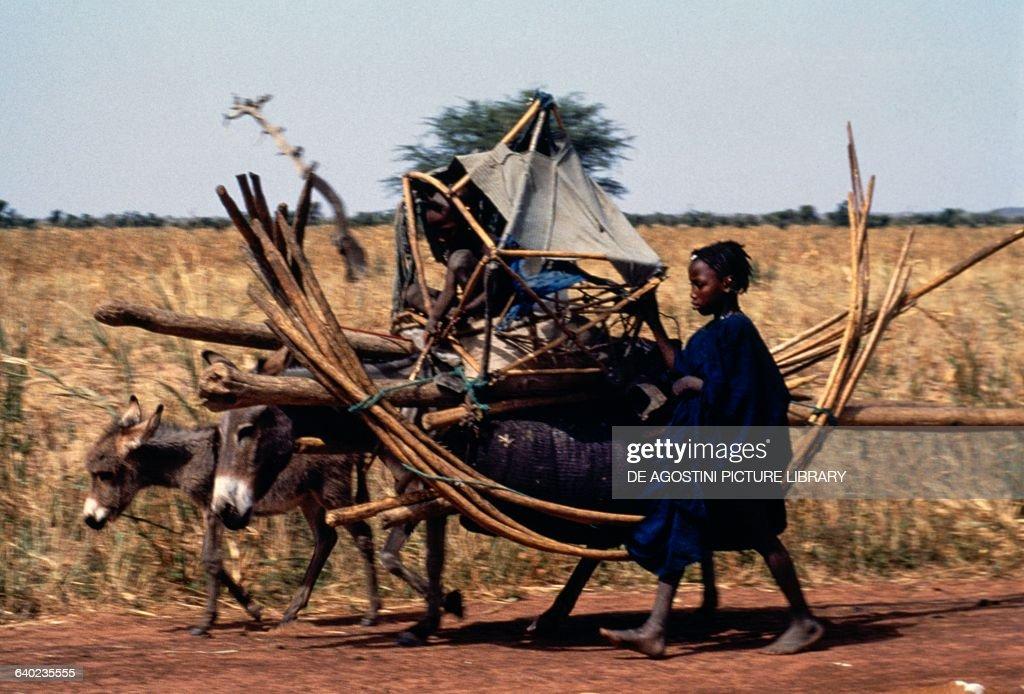 Children of the nomadic Fulani tribe, Futa Jalon : News Photo