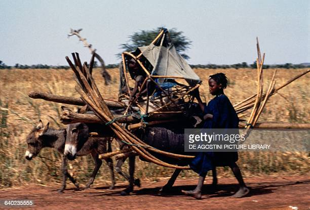 Children of the nomadic Fulani tribe with donkeys for transporting tents Futa Jalon Guinea