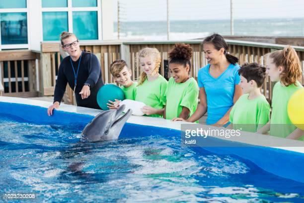 kinderen op excursie, dolfijn, trainer bij marine park - dierentuin stockfoto's en -beelden