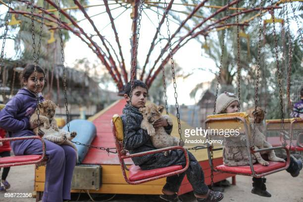 Children on swings hold newly born triplet cubs at a zoo in Khan Younis district of Gaza City Gaza on December 26 2017 One of the cubs died short...