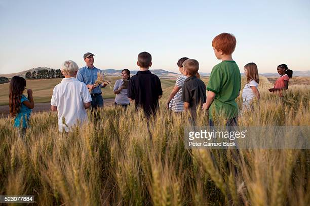 children (6-7) on trip in wheat field - education stock pictures, royalty-free photos & images