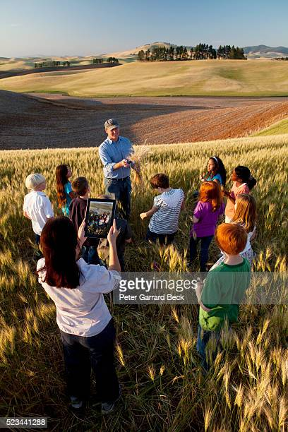 children (6-7) on trip in wheat field - field trip stock pictures, royalty-free photos & images
