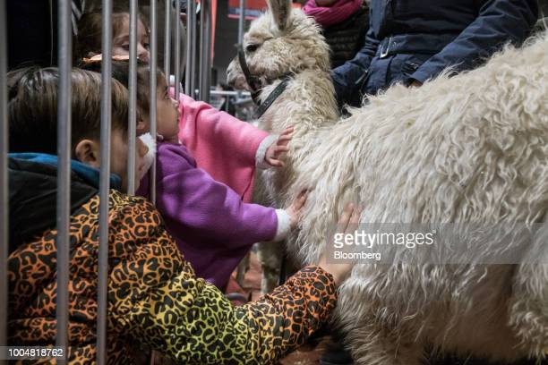 Children pet a llama at the livestock pavilion during La Exposicion Rural agricultural and livestock show in the Palermo neighborhood of Buenos Aires...