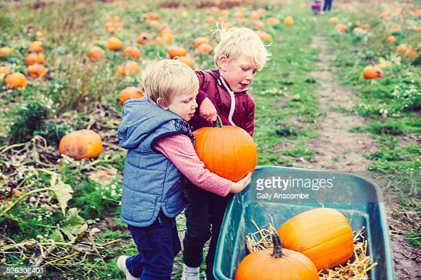 Children picking pumpkins