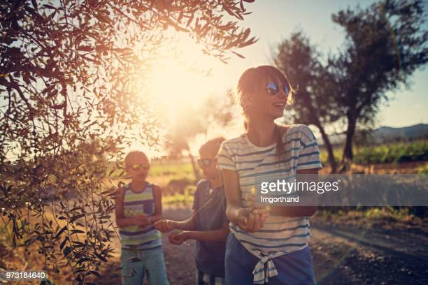 children picking up olives in olive grove, tuscany, italy - grove_(nature) stock pictures, royalty-free photos & images